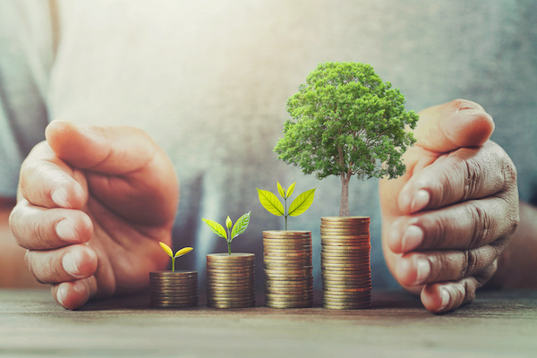Stop loss order: Money growing with trees concept